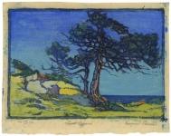 Coast Cypress.