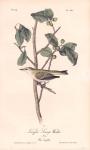 Tennesee Swamp Warbler.  Pl. 110.