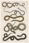 Tab. XLV. (Five Snakes}.