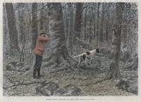 Ruffed-Grouse Shooting - An Open Shot.