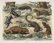 Tab. CVIII.  Reptiles.