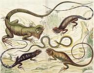 Tab. XCV.  Reptiles.