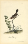 Lark Bunting. (Male).  Pl. 158.