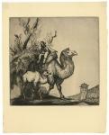 Camels. [Untitled.]
