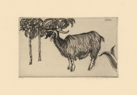 Sicilian Goat.