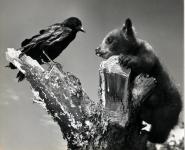 Bear with Crow.