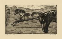 Western Horses.