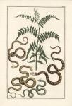 Untitled Snake.  Tab.  V.