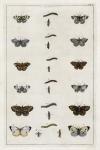 Untitled Butterflies.  Tab. II. [Papilio species].