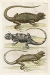 Untitled Reptiles.  Tab. CVII.