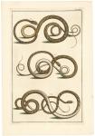 Untitled Snakes.  Tab. XXVI.