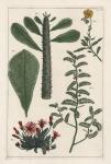 Untitled Botanicals.  Tab. IX.
