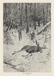 Bull Moose.  The,