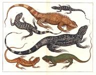Tab. XCVI. {Six Lizards - Tecuixin}.
