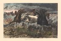 Stampede of Wild Horses.