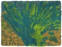 Joshua Tree Cactus/ Borrego Desert.